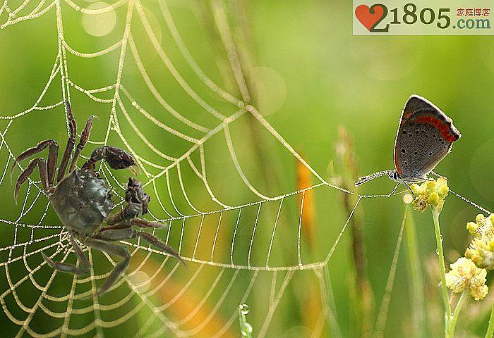 河蟹上网才能创造和谐的网络环境